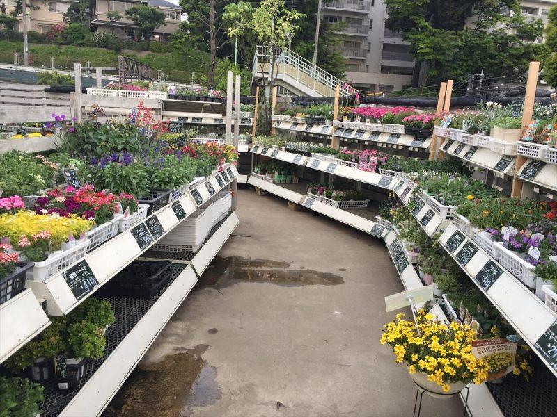 通路の両側の値札がついた白い棚に様々な種類と色の草花がいっぱい置かれている