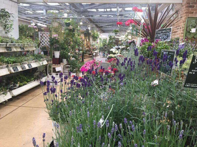 広々とした店内にラベンダーを始めとした草花でいっぱいになっている