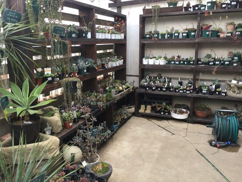 四段の木製の棚に値札がついた多肉植物が並んでいる