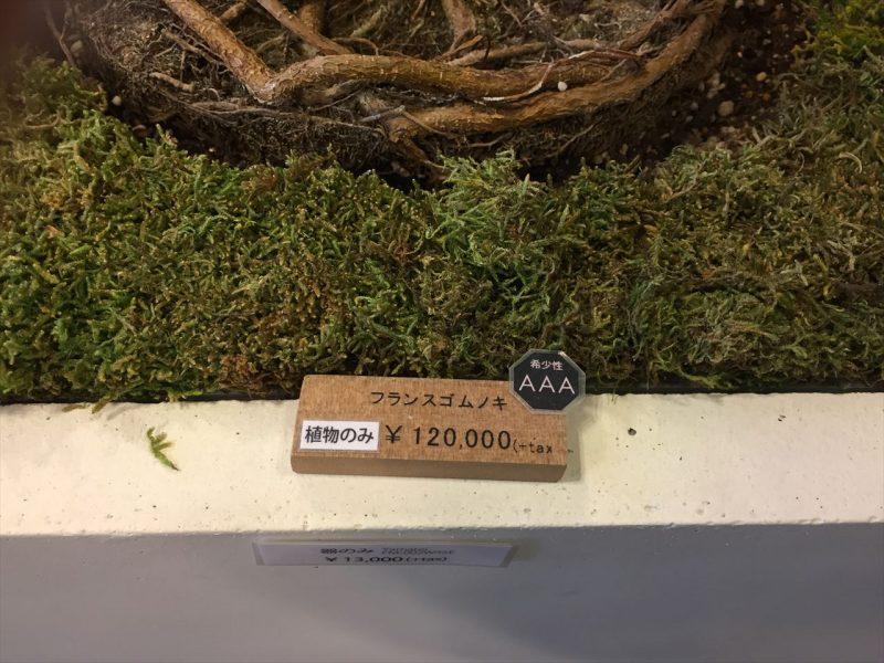 白い鉢植えの縁に置かれた12万円の値段が記載された希少価値の高い観葉植物の値札