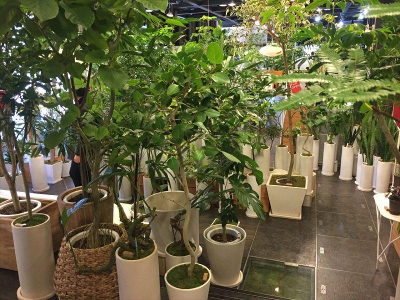 白い鉢植えで統一された様々な観葉植物