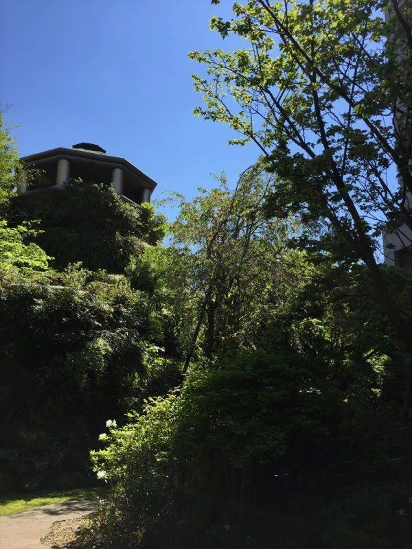 樹木の隙間から見える壁面緑化のタワー