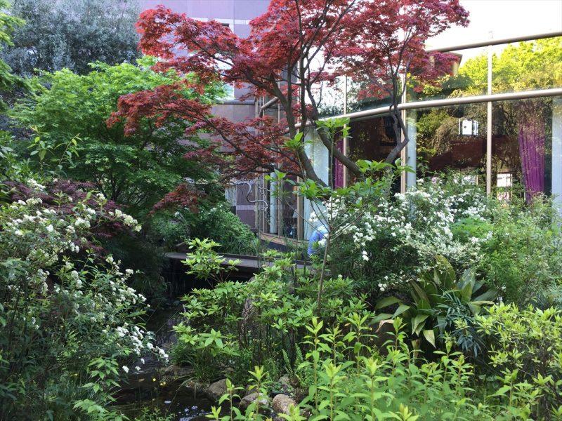 ホテルのカフェの窓辺の池と植物