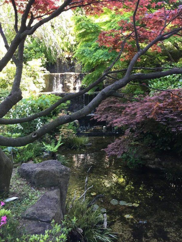 紅葉の枝と紅葉した葉っぱ越しに見える三段の滝