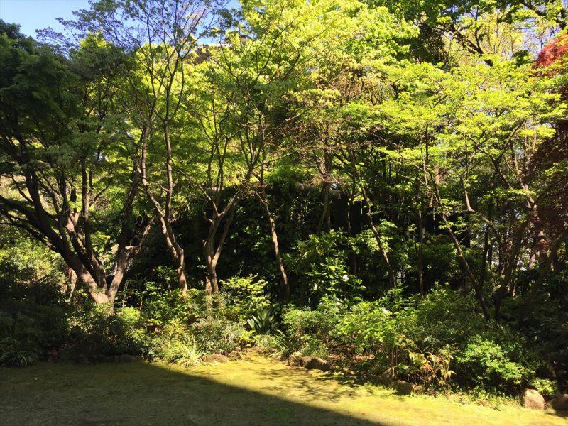 ガーデンの開けた場所に新緑の樹木が並ぶ