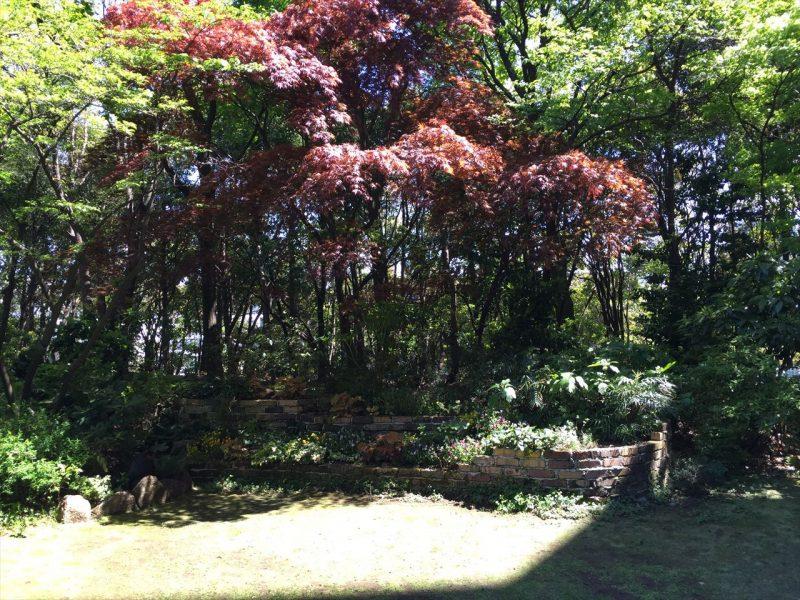 レンガの三段花壇の奥にある印象的な紅葉の木