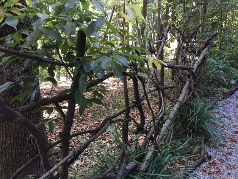 枯れ木で組み上げてあるフェンス