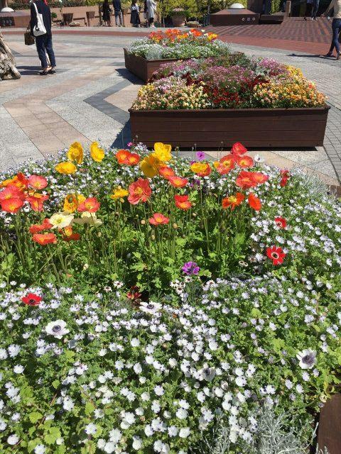 恵比寿ガーデンプレイス入り口付近にあるお花がいっぱいの花壇