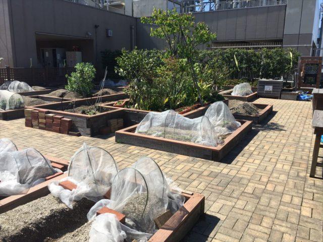 レンガでつくられた家庭菜園用の小さな温室が10数個
