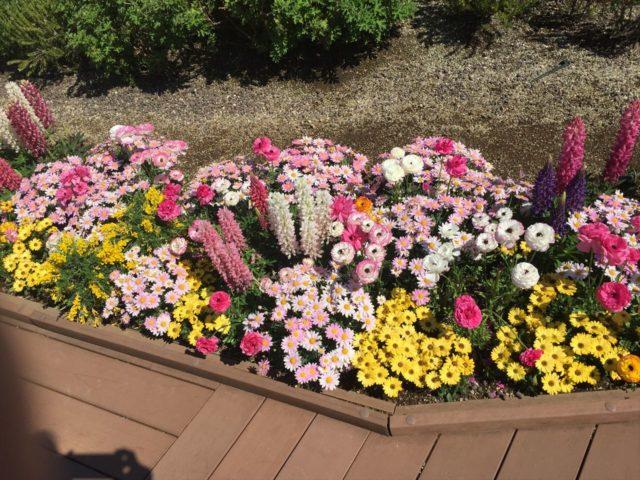 たくさんの春の花が植栽された花壇