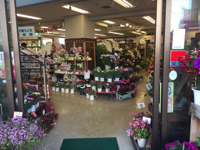 豊富な花々が見えるお店の中