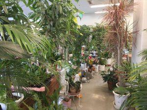 店内に色々な観葉植物が販売されている