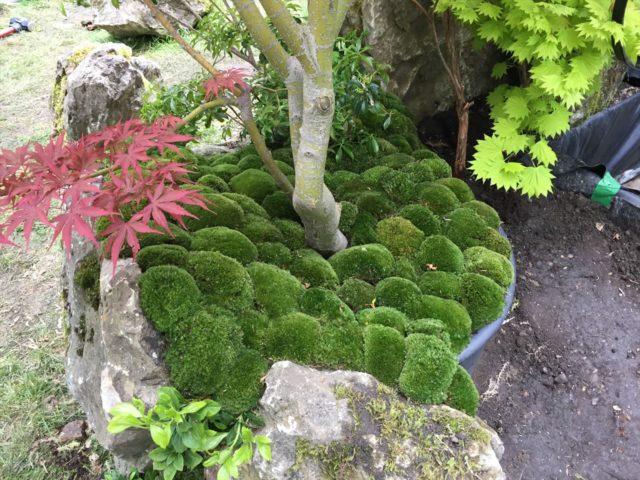 紅葉の根元にコケが植栽されている庭