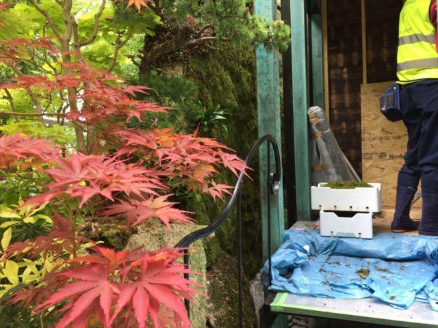 庭の壁面にはられたコケ