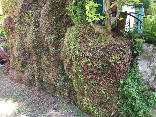 お庭の壁に張り付けられた多肉植物セダムがシート状になったもの