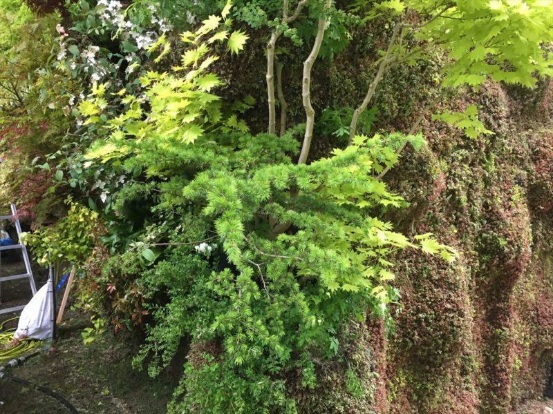 セダムと紅葉を中心に植栽されている庭の壁の裏側