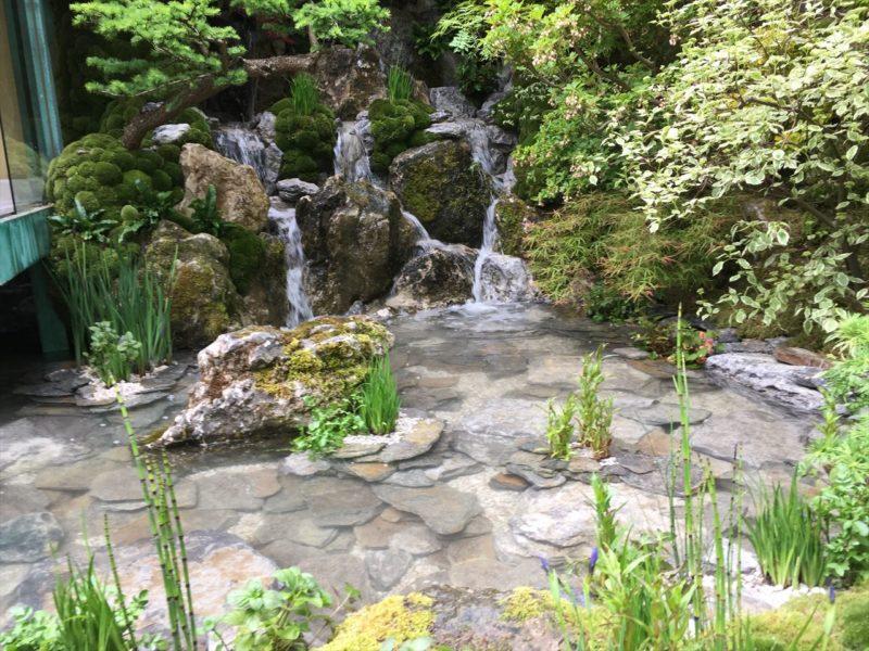 池の中の植栽