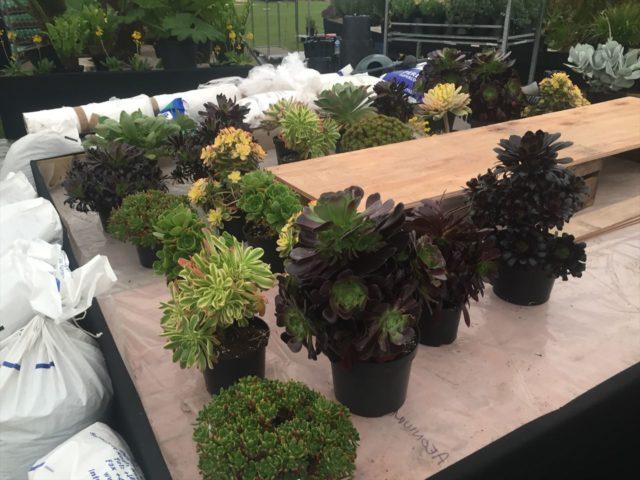 台の上に置かれた多種な多肉植物