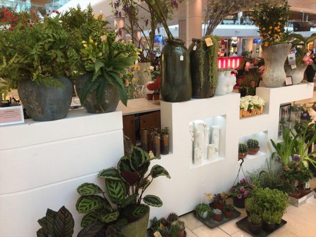 白い花屋の壁に置かれた売り物の鉢植え