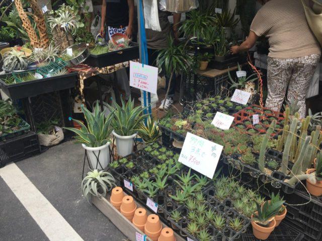 販売される植物達