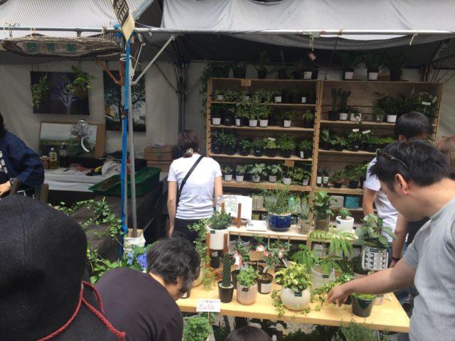販売される植物たち