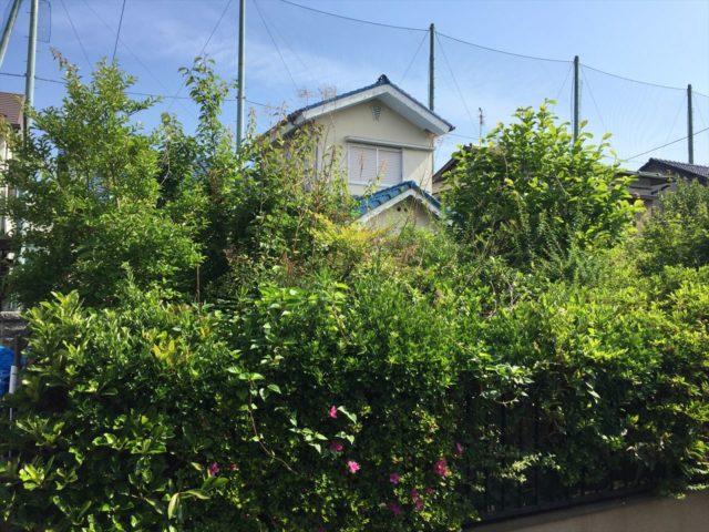 樹木で1階部分が見えない個人邸