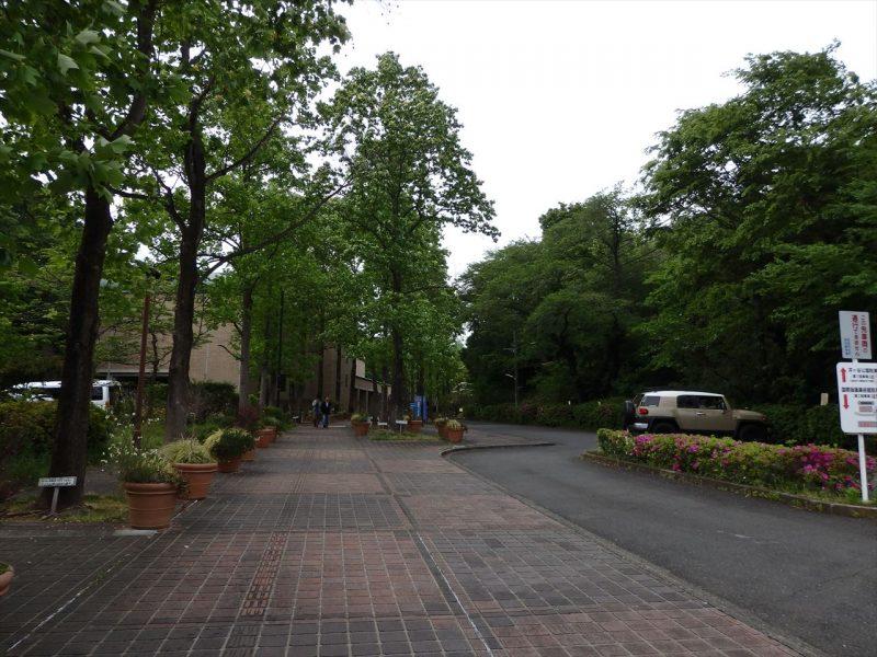 高い木々の街路樹とレンガ調の歩道と道路が奥のレンガ調の建物まで続いている風景