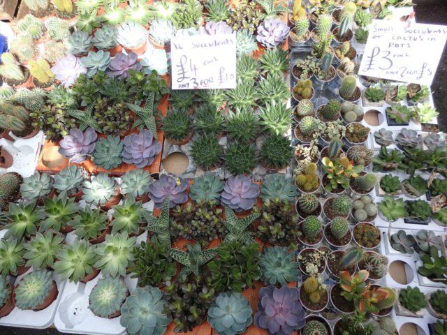 ロンドンの花屋に並べられた多肉植物