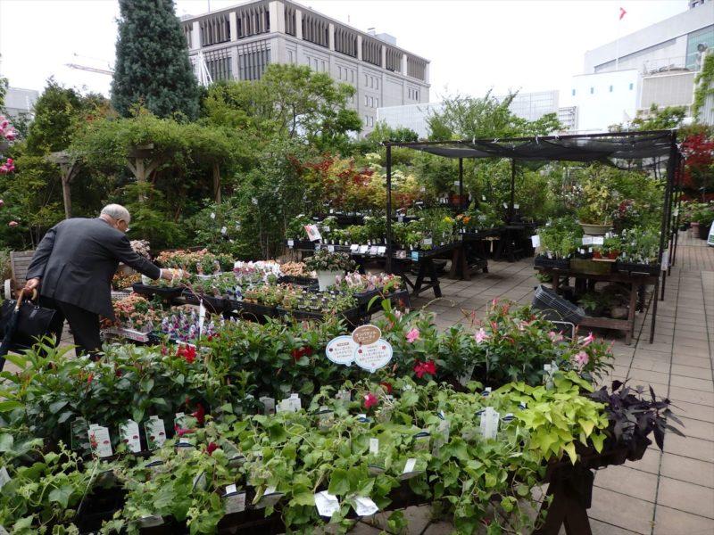 屋上の園芸店のバラコーナー