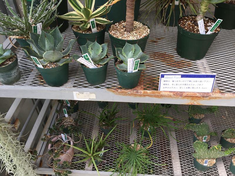 人気園芸店の人気植物