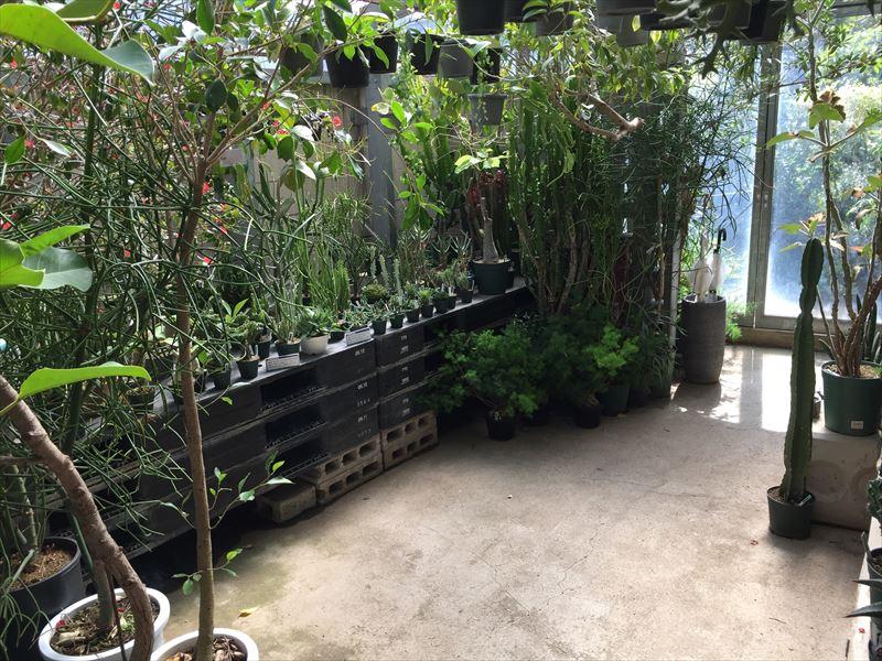 園芸店の温室