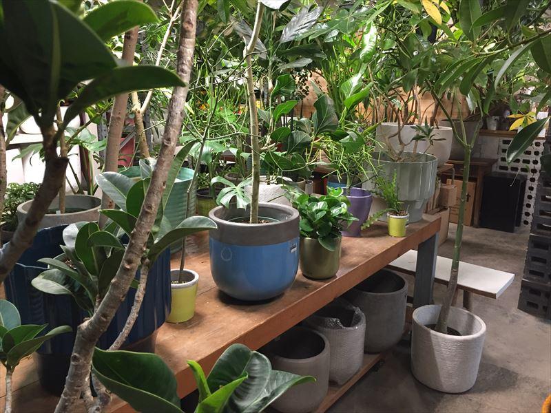 観葉植物が生い茂った園芸店店内