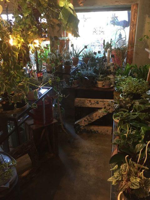 三軒茶屋で人気の園芸店店内