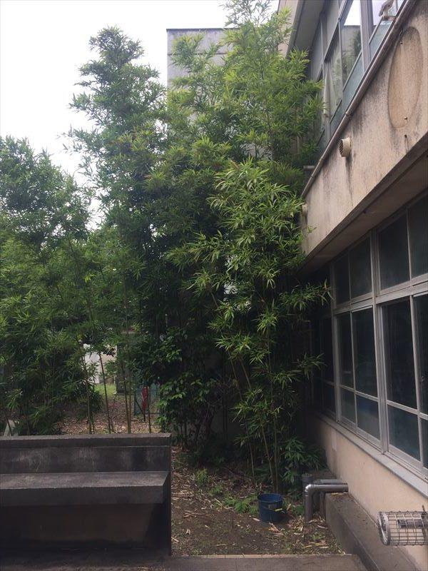 竹が生い茂った公共施設