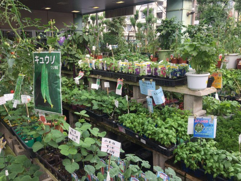 人気の野菜園芸コーナー