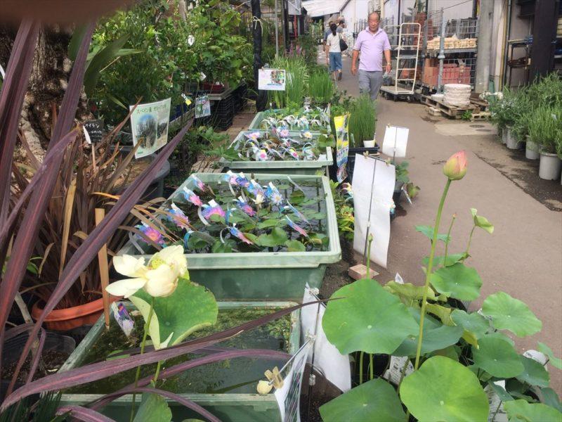 水生植物も豊富な店