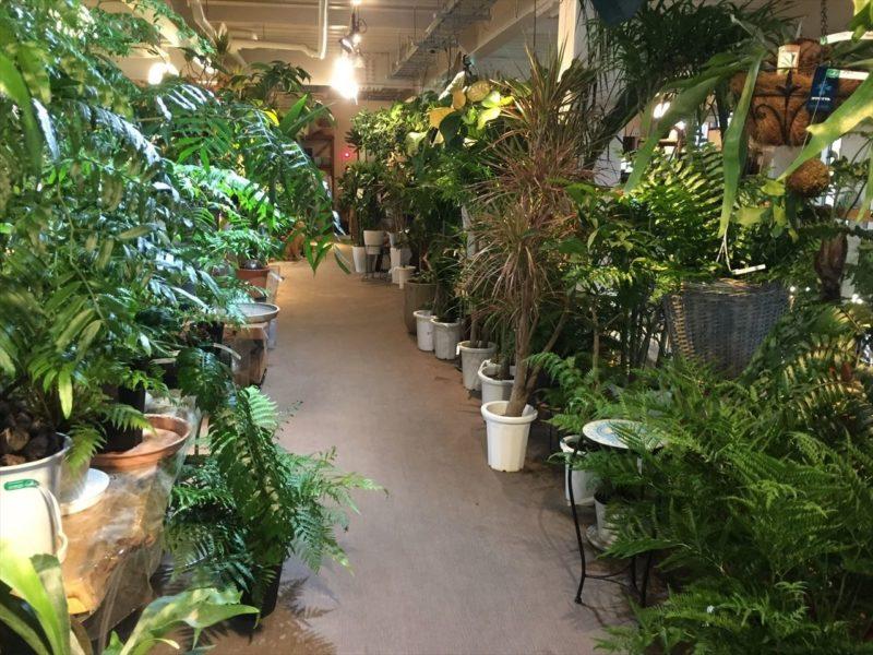 広い観葉植物売り場
