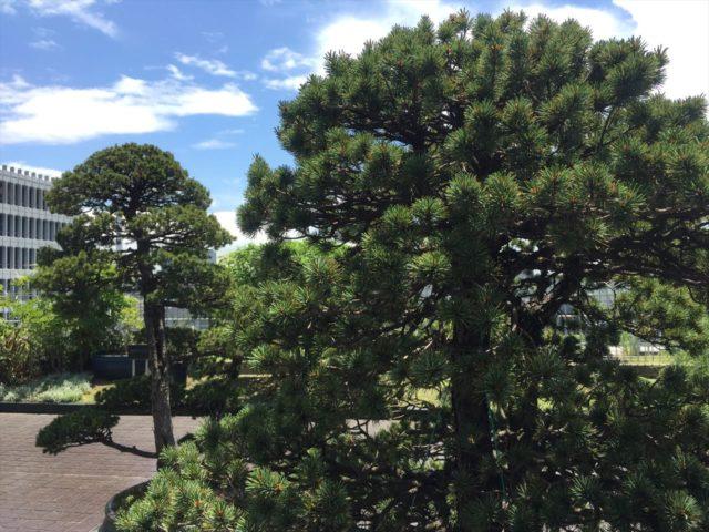庭園のシンボルツリー