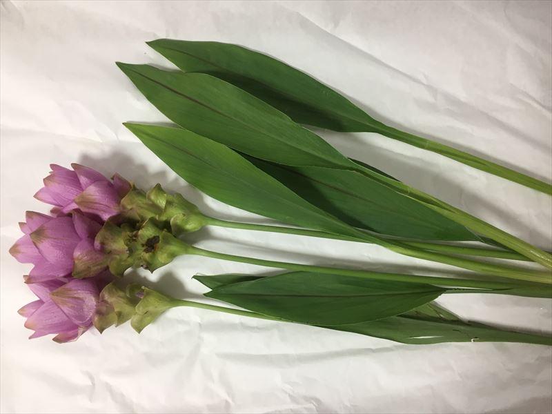 背の高い花の生花の為の花材クルクマ