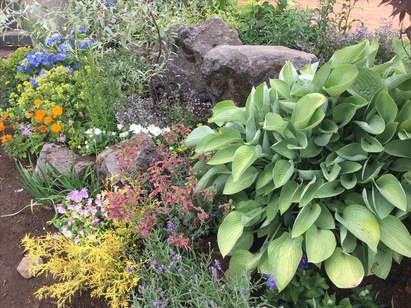 多様な植物がランダムに並ぶ花壇