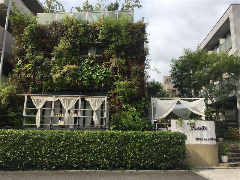 伸び放題、枯れ放題の壁面緑化