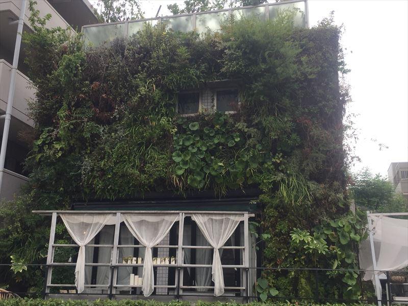 手入れ後の壁面緑化