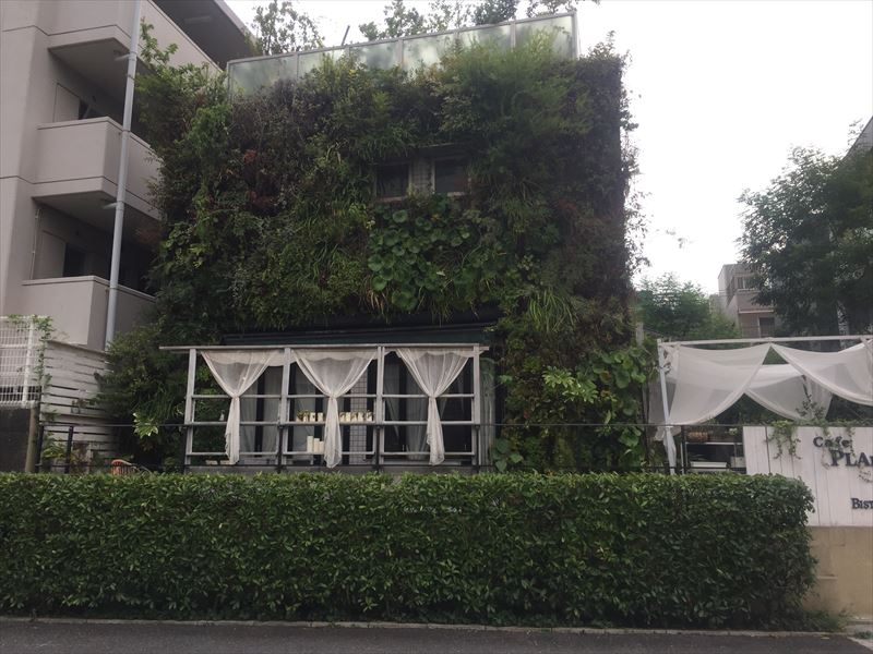 枯れた枝、植物を処置して手入れした壁面緑化