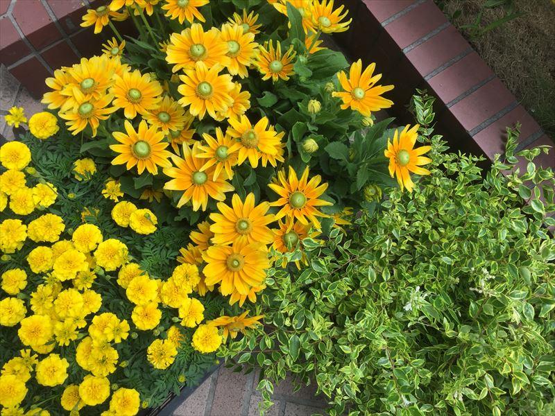 花持ちが良く、真夏でもOKの花