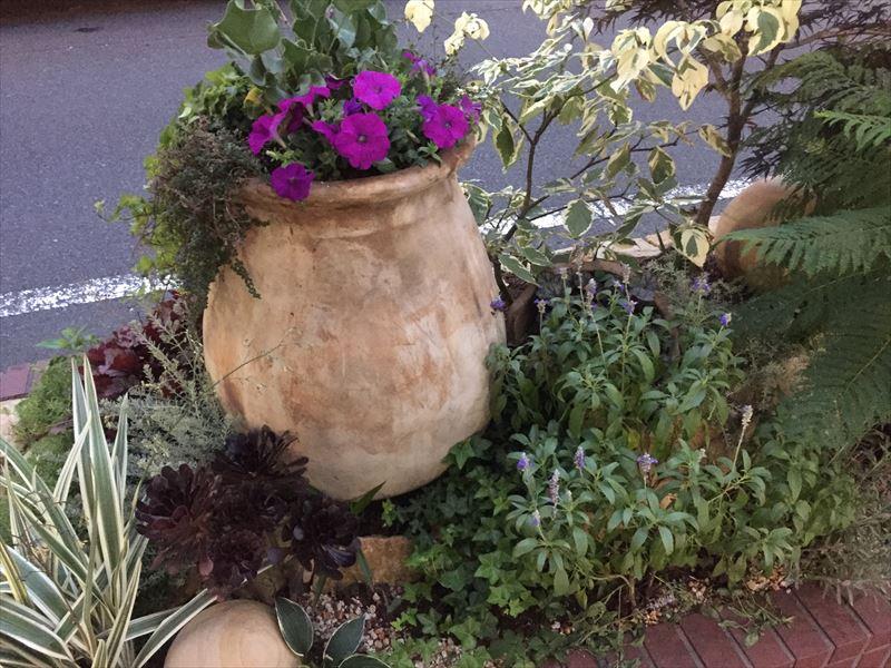 季節の花を植栽したポット