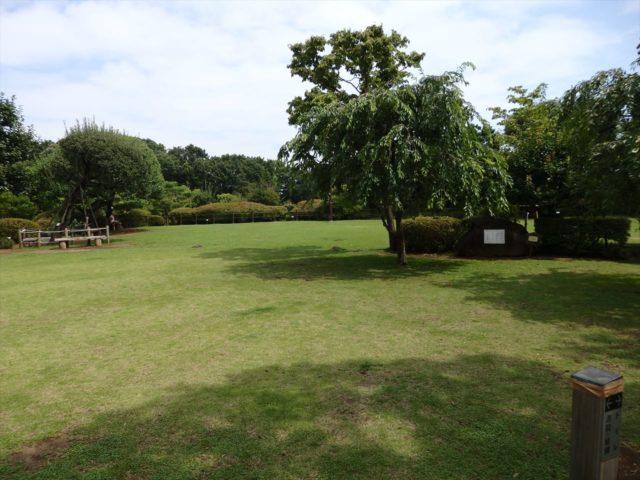綺麗に管理された芝生