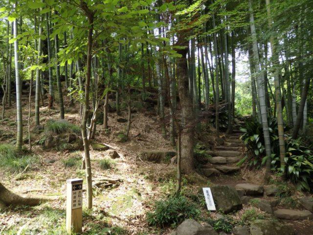 竹やぶになっている道