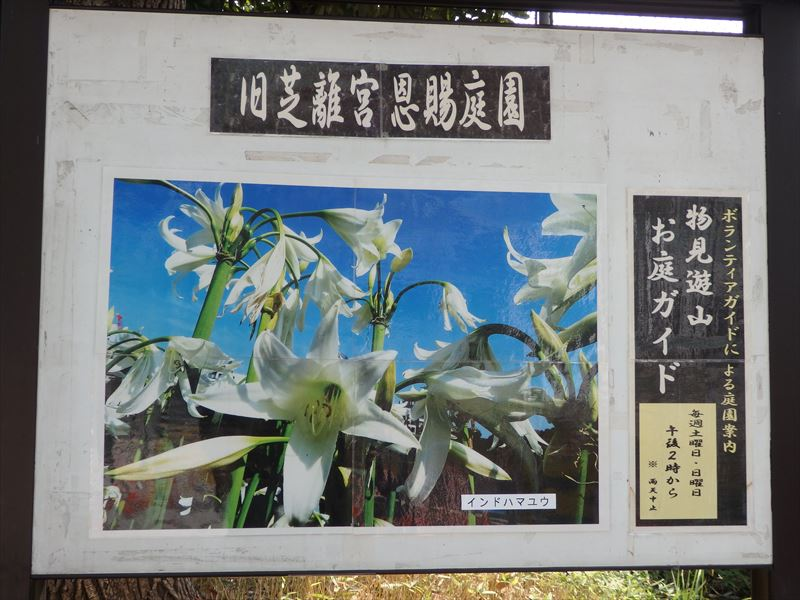 9個ある都立庭園の一つ