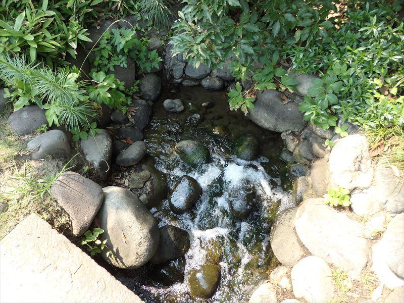 昔は海水を引き込んでいた池の現在の水源