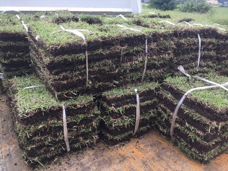 収穫されて出荷待ちの新鮮な芝生